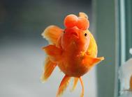 鱼类也有智商?