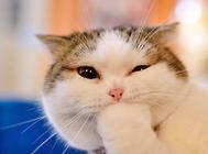 猫岛:属于猫咪的天堂