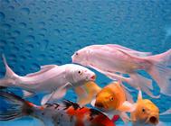 鱼缸加热棒如何调节水温