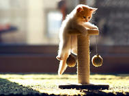 如何利用好猫玩具