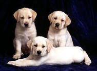国外养狗的相关法律