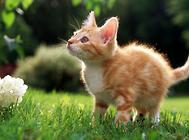 不同猫砂的特点