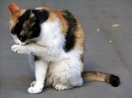 猫罐头给猫吃了会拉稀吗?