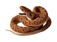 养蛇要有哪些基本概念