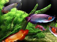 鱼缸水怎么变清澈?