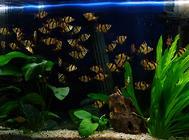 认识生态鱼缸的标准