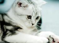 伟嘉猫粮选择的四大误区