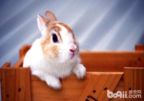 如何防治兔大肠杆菌