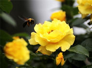 植物病害常见的两大原因