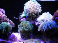 家庭鱼缸养鱼要注意颜色搭配