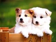 正确认识狗狗牵引绳的两大谣言