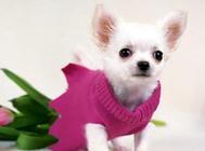 幼犬衣服是否必要