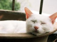你知道养猫的适宜环境吗?