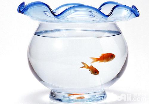 新手鱼缸养鱼的常见问题有哪些
