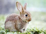 如何安全养兔