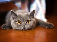 训练猫咪使用猫抓板的小技巧
