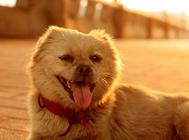 狗狗皮肤病时可以吃处方粮吗?
