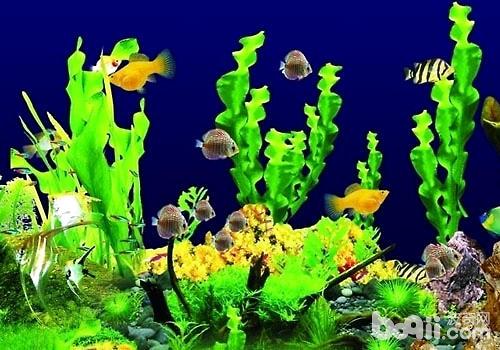 硝化菌对鱼缸养鱼的重要性