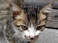 松木猫砂使用时要注意什么?