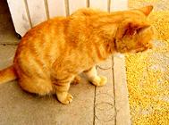猫用驱虫药使用的时间是什么?