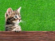猫咪化毛膏多久喂一次