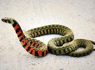 蛇的感觉系统和神经系统是怎样的