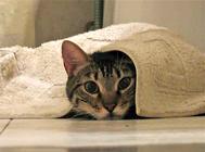 猫咪多大可以进行猫咪驱虫