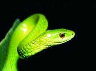 蛇的基本饲养