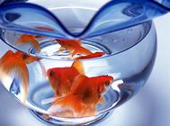 鱼缸开缸要注意什么?