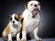 幼犬粮中的矿物质有什么作用?