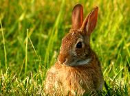 兔笼子怎么选择?