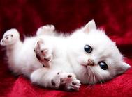 猫驱虫药需不需要空腹喂食