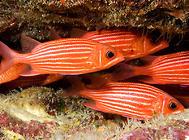 鱼缸中养金鳞鱼要注意什么?