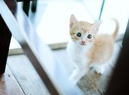 猫咪适应新家的几点注意事项