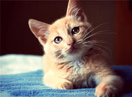 新到家猫咪需要准备哪些猫猫用品
