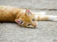 安全养猫 杜绝家中养猫隐患