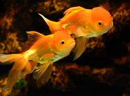 新手养鱼的两个误区
