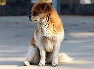 狗狗航空箱的挑选时的尺寸要怎么选