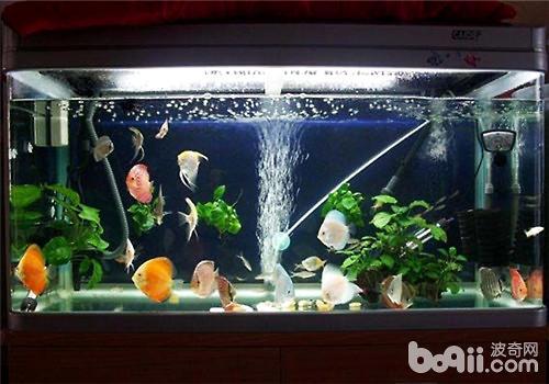 常见的观赏鱼鱼缸分类
