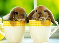 五类常见的宠物兔用品