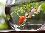鱼缸的日常保养怎么做?