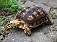 你听说过龟龟出眠厌食症吗?