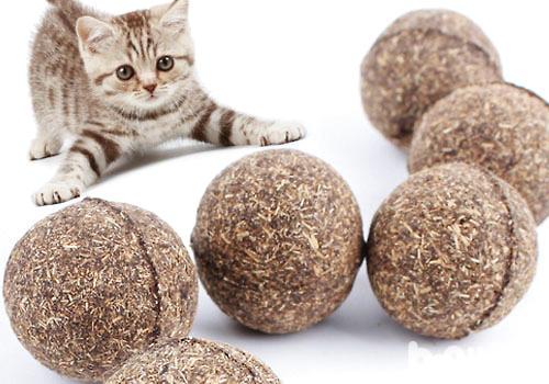 猫是否需要定期吃化毛膏