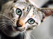 怎么避免养猫扰民?