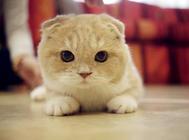 猫咪训练的几个技巧和注意事项