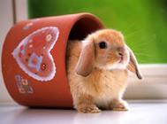 如何做好兔兔防暑工作