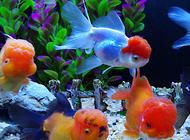 金鱼鱼缸怎么投料