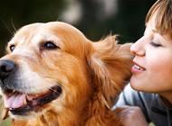 犬心保和拜宠清该选哪个