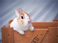 兔子窝布置需要考虑哪些因素
