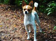 狗狗皮肤病的原因是什么?